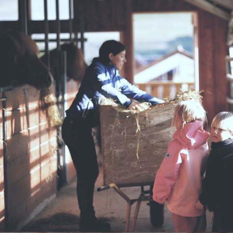 Sturlureykir Horse Farm - Iceland